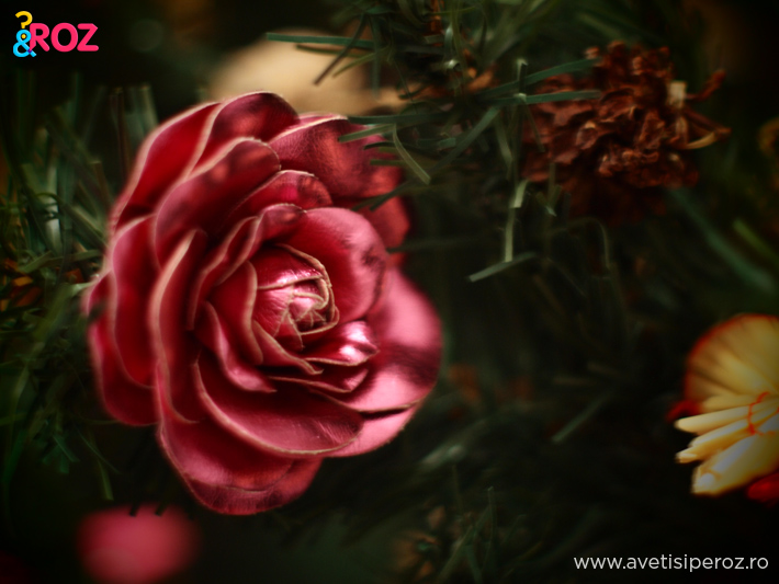 trandafir-in-brad.