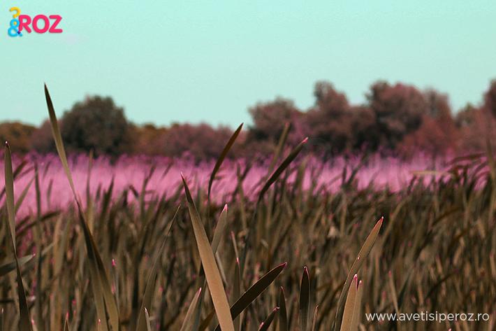 camp roz