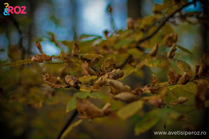 frunze in padure toamna