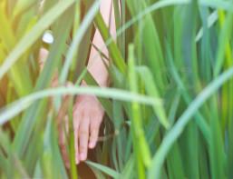 la iarba verde 1 mai