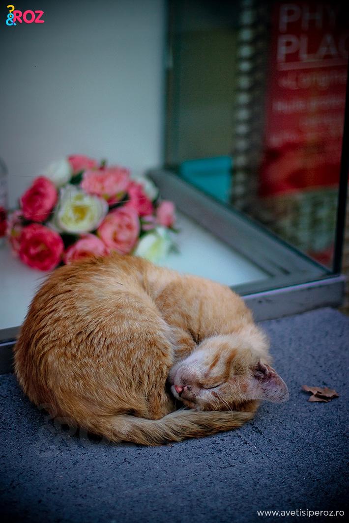 pisica la istanbul