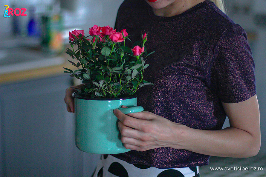 ghiveci cu trandafiri bucatarie