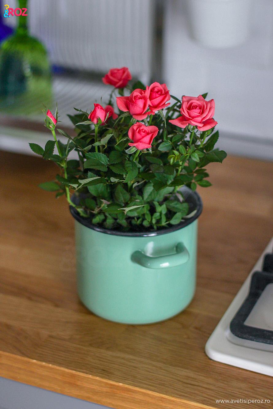 ghiveci flori retro