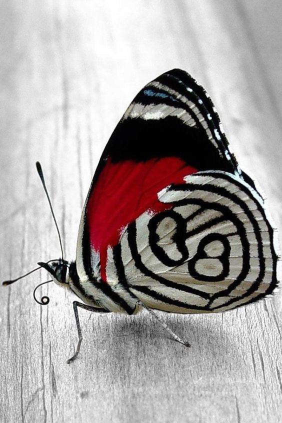 fluture in dungi
