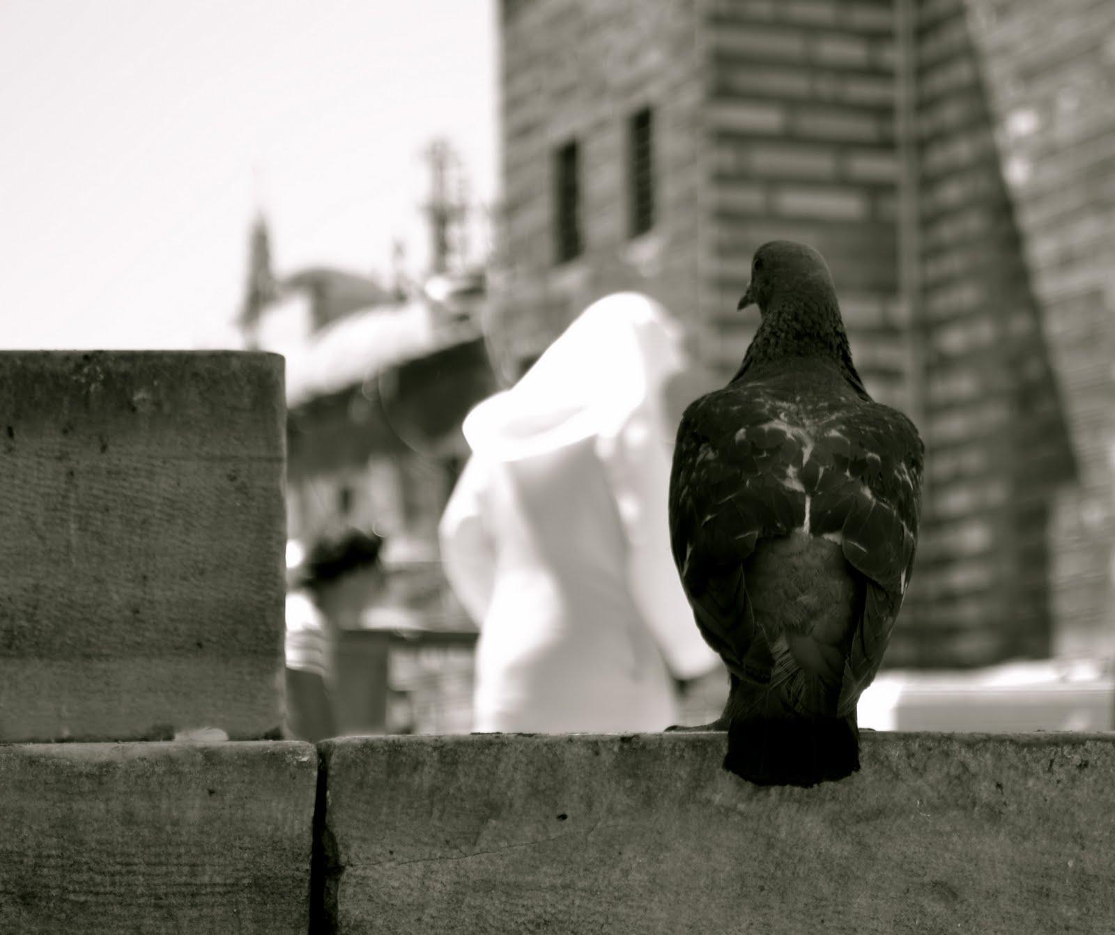 alb si negru in istanbul