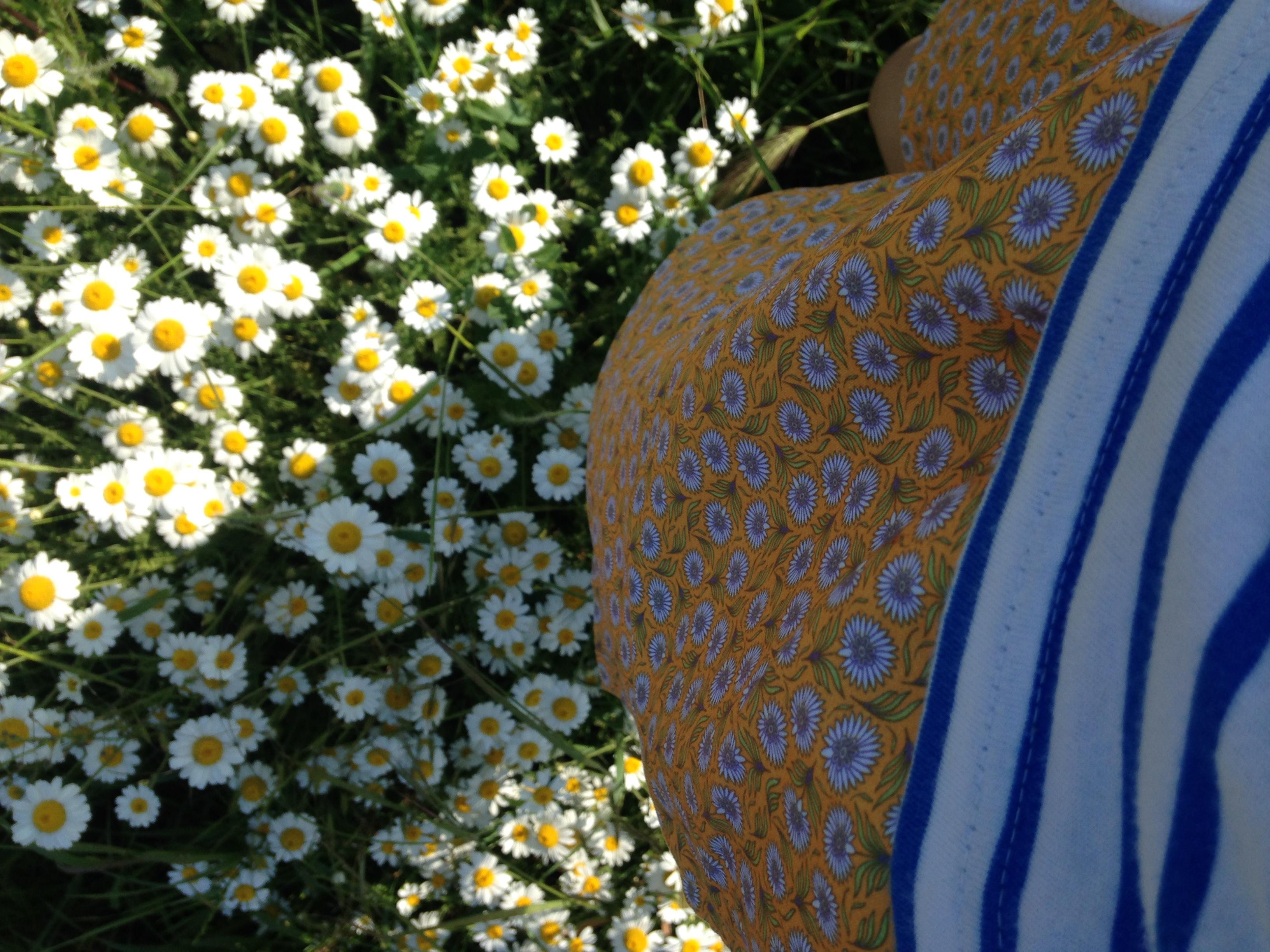 dungi si flori