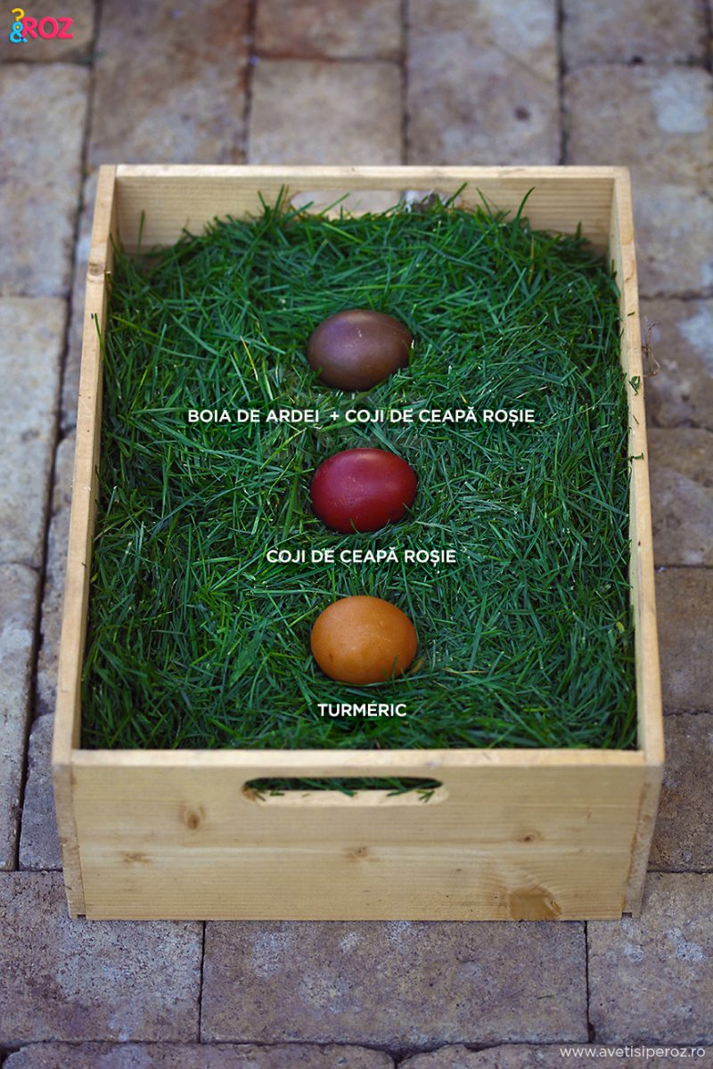 cum poti vopsi oua de paste in culori eco