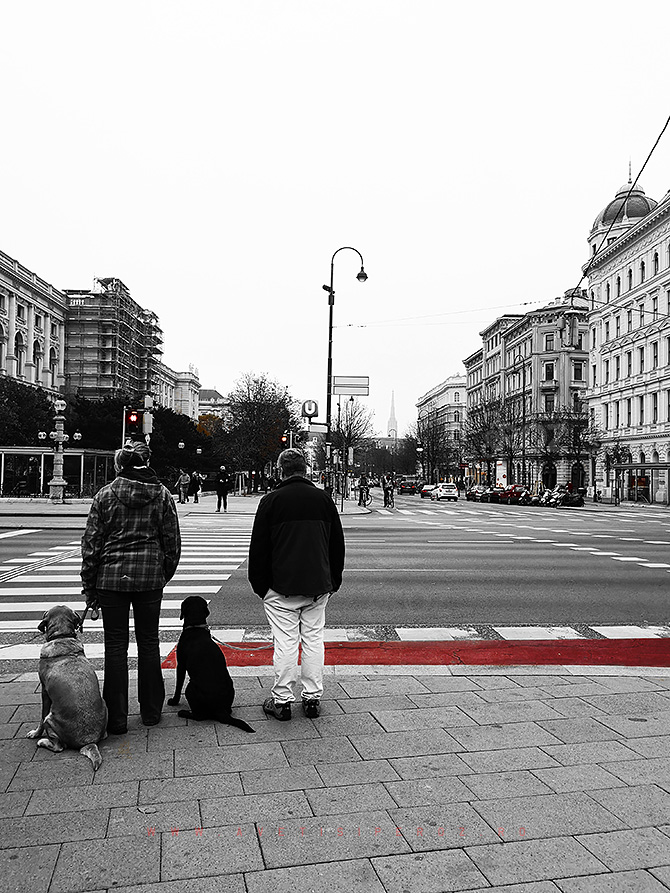 dogs-in-vienna