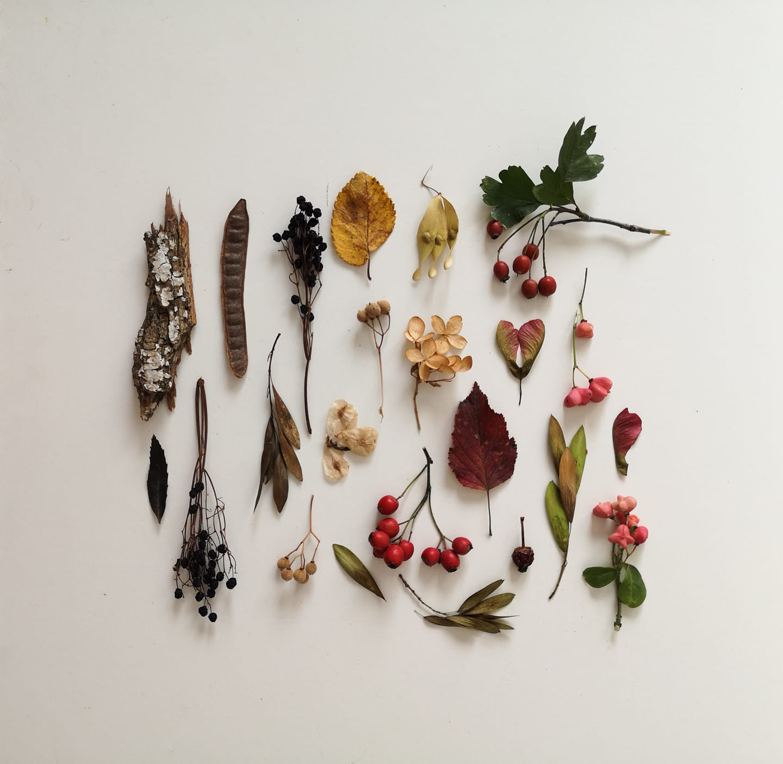 colaj cu frunze presate