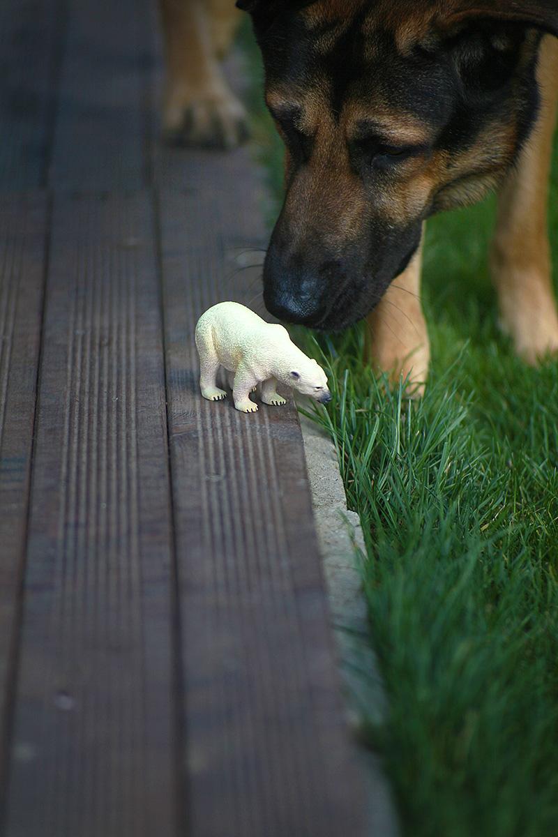 adopta un caine