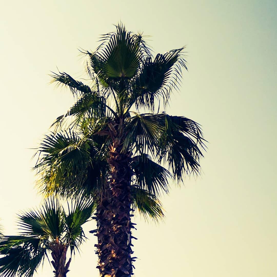 palmieri la therme