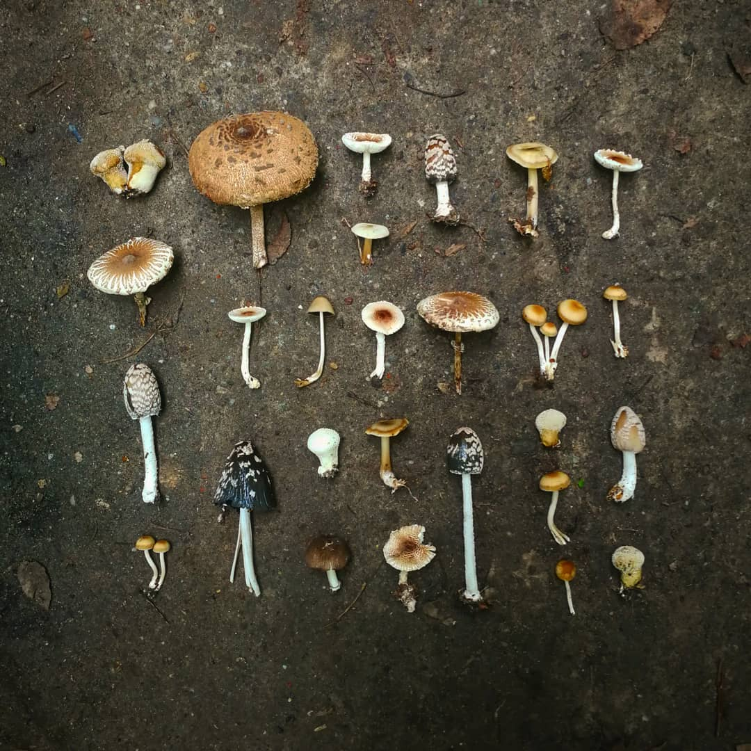 #AranjateDeLiana cu ciuperci