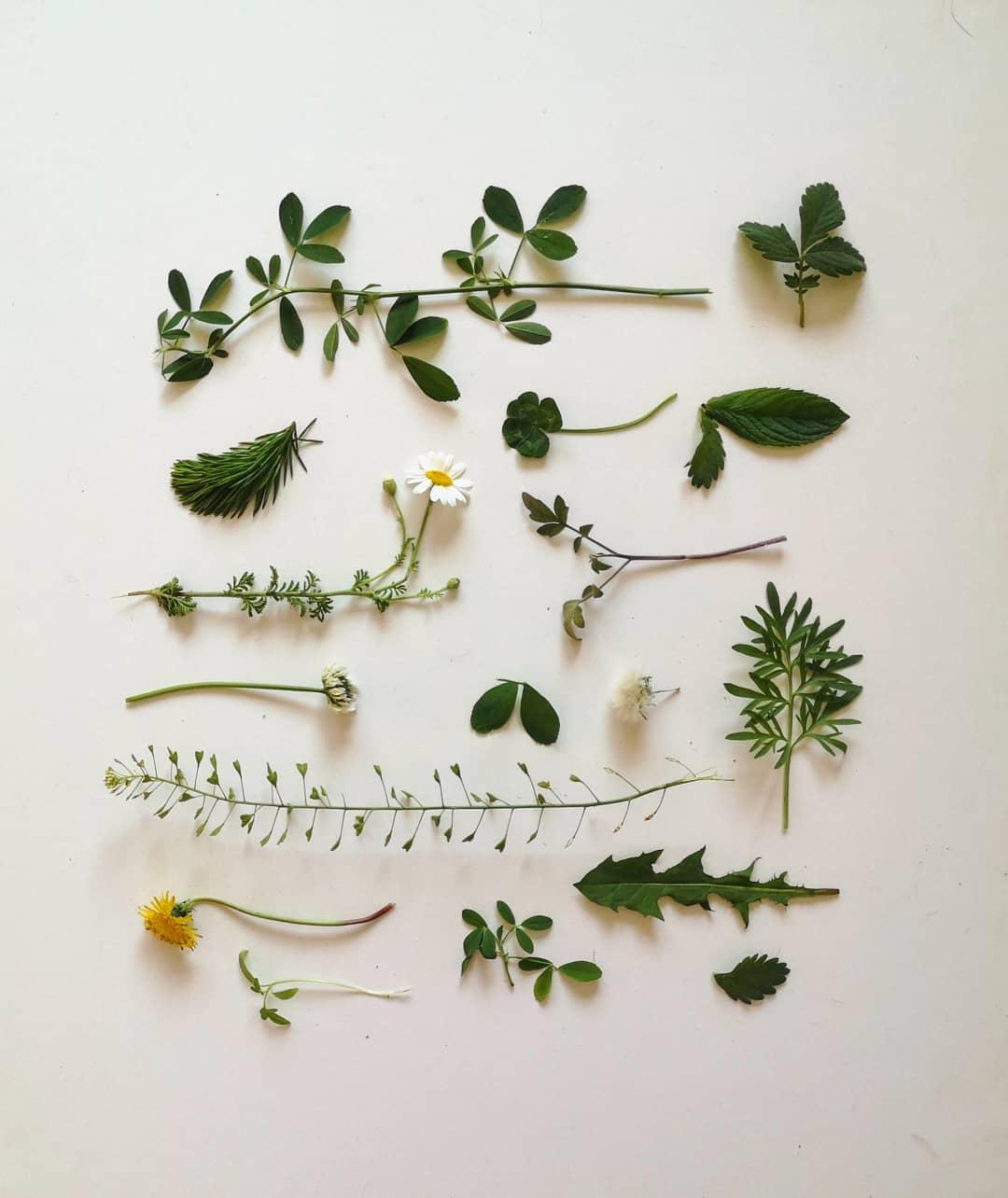 plante din gradina mea