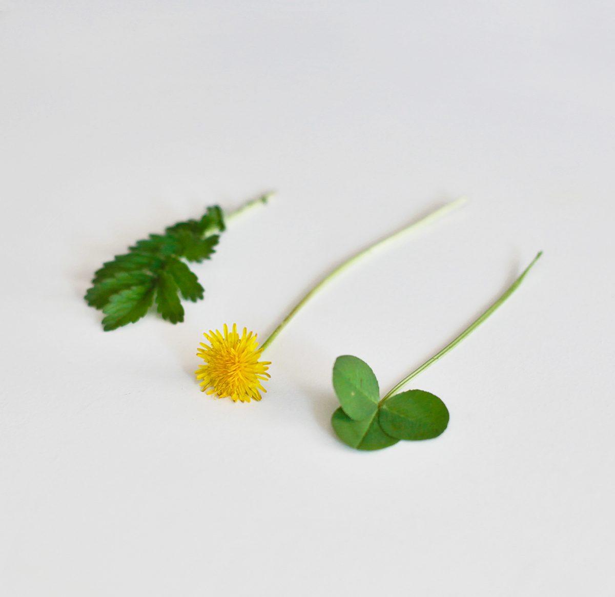 oua de paste cu model din plante