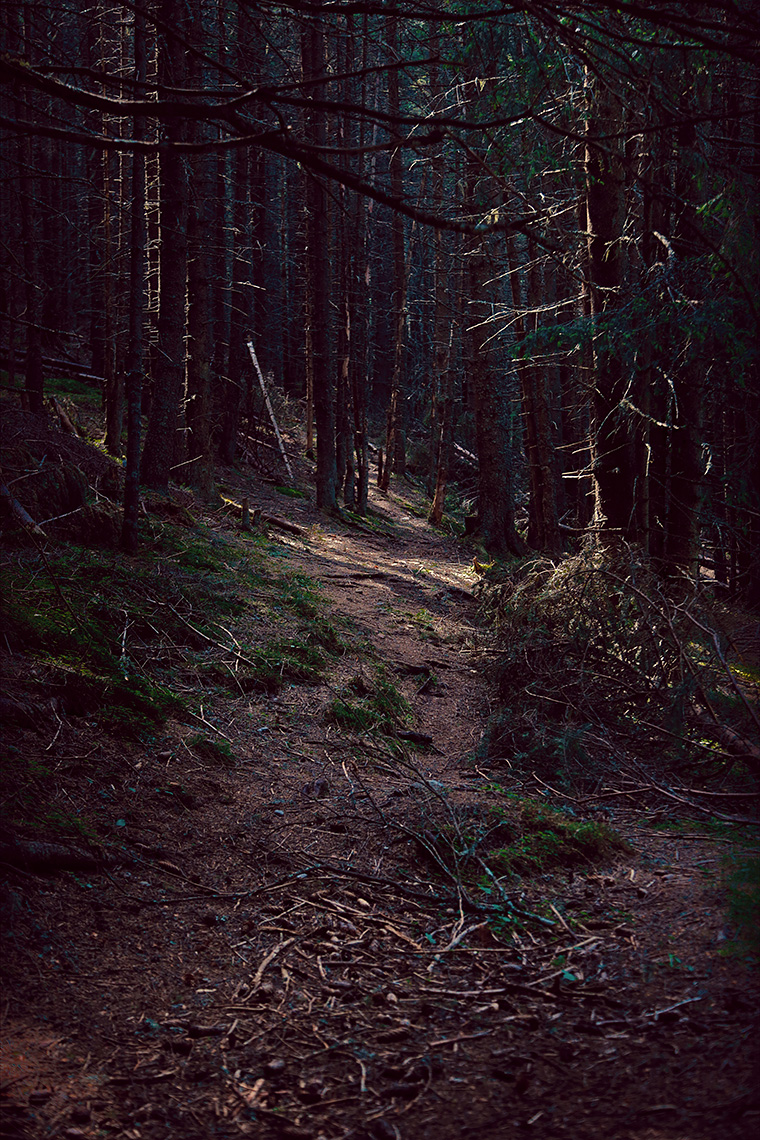 plimbare prin padure